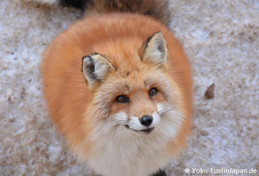 foxvillage001